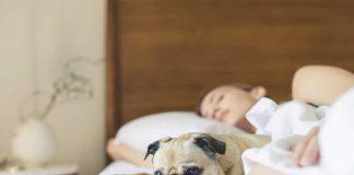 vrouw die ligt te slapen met hondje op het bed