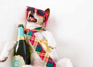 Hondje met een kater en een fles wijn